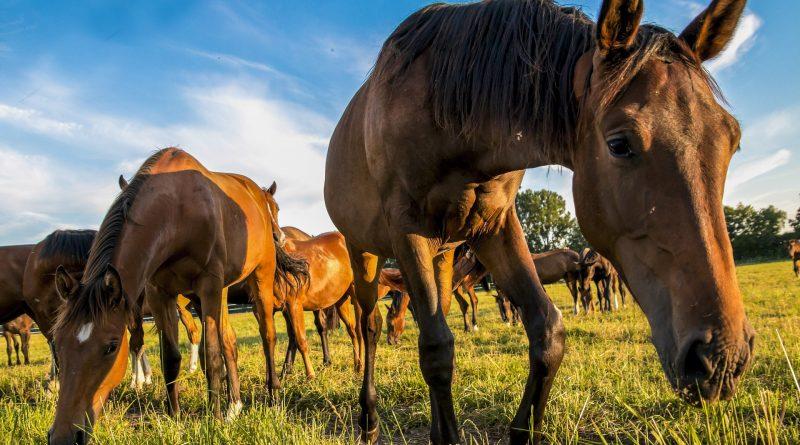 Comportamiento del caballo