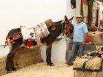 Los burros de Juanino