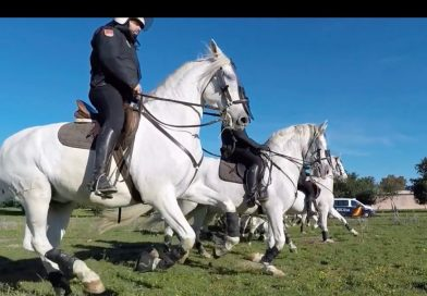 Imagen del vídeo que reproducimos del entrenamiento del Escuadrón de Caballería de Andalucía en Cortijo de Cuarto, Sevilla.