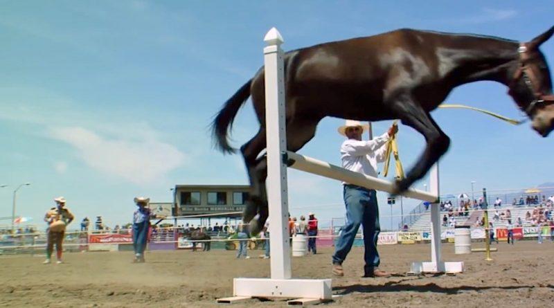 Video de los mejores ejemplares de mulas de Estados Unidos.