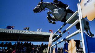 Los mejores caballos de deporte se miden en Dehesa Montenmedio hasta el próximo 19 de marzo.