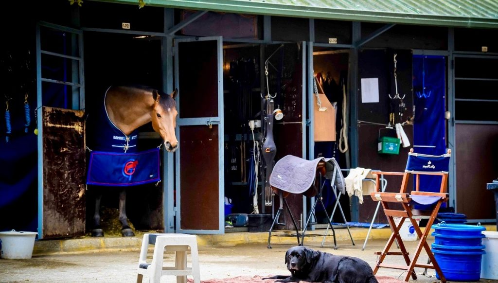 Un perro y un caballo de salto descansando en los establos de Dehesa Montenmedio.