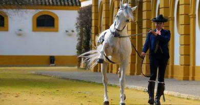 Andalucía no cubre la demanda mundial de jinetes de alta escuela