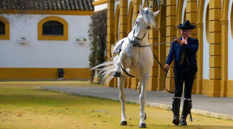 Un caballo hace el paso español en riendas largas en la Real Escuela del Arte Ecuestre.
