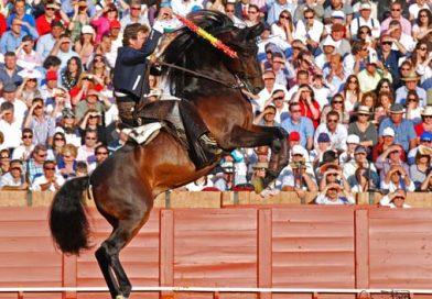 El jerezano Fermín Bohórquez Domecq en la plaza de toros de Jerez en 2010. Foto publicada por Enrique Romero en Toros Para Todos.