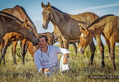 El jerezano es el heredero de una de las estirpes más populares del caballo español. Los hermanos de estos potros son alabados en todo el continente americano. (Fotos: Miguel Ángel González/Diario de Jerez)