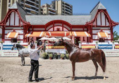 Al Campeón de Campeones, Ainhoa Saadeen, lo potenció en la mano el arcense José Ruiz, hijo de Pepe, presentador de los caballos Méndez. (Foto: Jose Contreras/Diario de Jerez)
