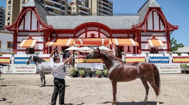 El Campeón de Campeones lo potenció en la mano el arcense José Ruiz, hijo de Pepe, presentador de los caballos Méndez. (Foto: Jose Contreras/Diario de Jerez)