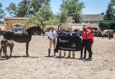 El ganadero de Almenara Alta y sus colaboradores, esta mañana en la entrega del premio Campeona de Campeonas, en Sementales. (Foto: Jose Contreras/Diario de Jerez)