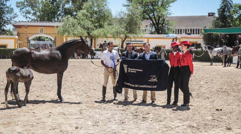 El ganadero de Almenara Alta y sus colaboradores, esta mañana en la entrega del premio Campeona de Campeonas a Sari, en el Depósito de Sementales. (Foto: Jose Contreras/Diario de Jerez)