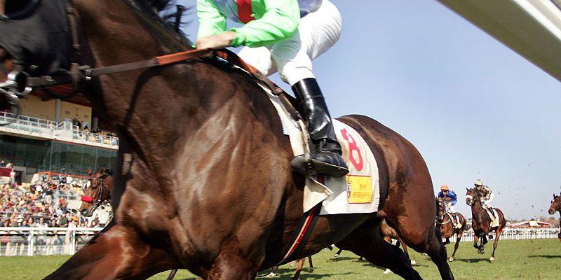 Un purasangre por los palos en el Gran Hipódromo de Andalucía, Dos Hermanas. (Foto: The Jockey)