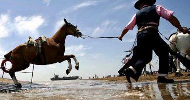 4 grandes cualidades que definen al caballo rociero