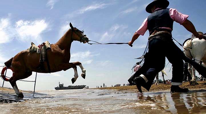 Un caballo rociero saliendo de la barca en el Guadalquivir en una foto publicada en el blog de Victoria Caro.