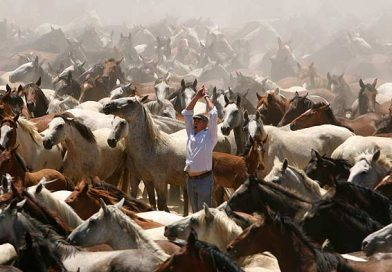 Los ganaderos marismeños convocan una protesta por la suspensión de la Saca de las Yeguas