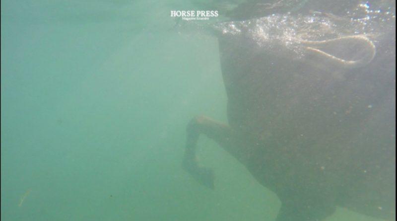 Imagen del vídeo sobre hidroterapia con caballos grabado en el cabo de Trafalgar el pasado domingo. (Vídeo: Horse Press)
