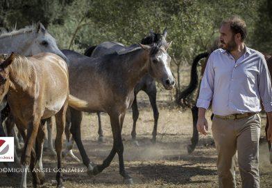El ganadero sevillano y las yeguas de La Cascajera, descendientes de la genética de Yeguada Militar. (Fotos: Miguel Ángel González/Grupo Joly)