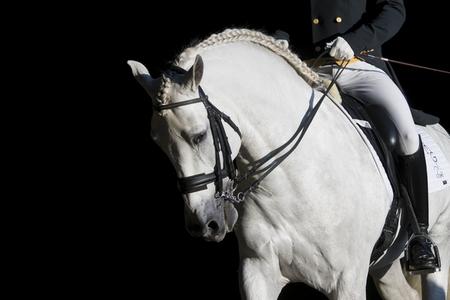 Un caballo tordo en una imagen de archivo de la exhibición nocturna del concurso sevillano.