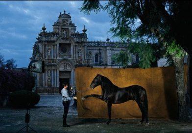 El semental de élite Osado XIV, del hierro de La Cartuja, ante el monasterio religioso jerezano. Fuente: Yeguada Peralta.
