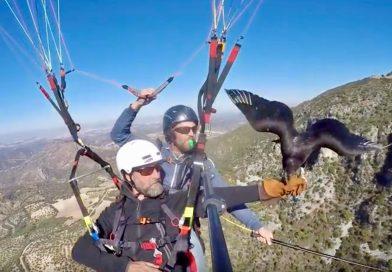 Fotograma del vuelo del halconero británico Scott Mason en Algodonales, Cádiz, el pasado noviembre.