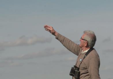 Fotograma del vídeo de Paco Jiménez avistando grullas hace unos días en el cortijo La Haba, junto a la laguna de La Janda, en Tahivilla. Vídeo: B. Benjumeda.