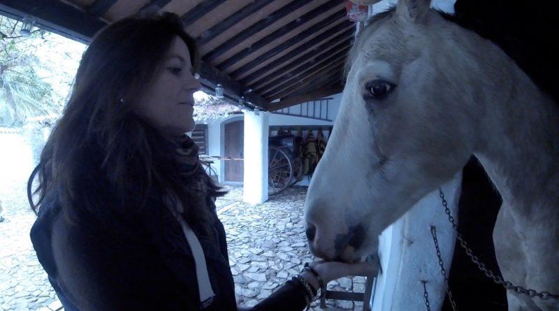 Belinda Braithwaite junto a uno de sus caballos, este lunes. Fotograma del vídeo de la noticia.