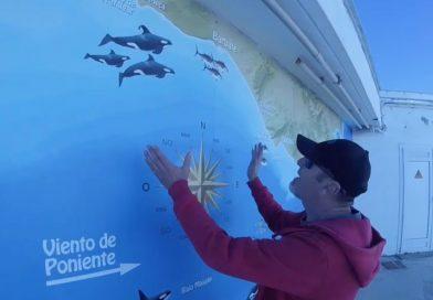 Fotograma del vídeo de las orcas que puedes ver en esta noticia.