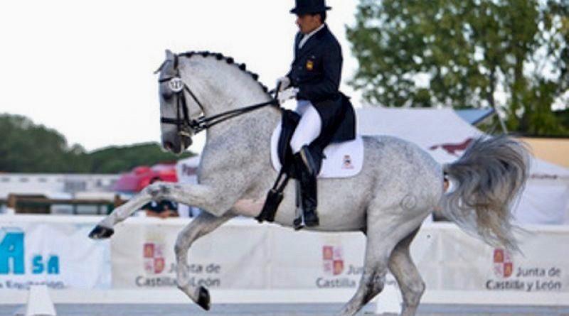 Norte Lovera, representante español en dos Juegos Ecuestres Mundiales, montado por el gaditano José Antonio García Mena, se vende en la subasta de elite de Jerez. Foto: Callejones del Duende.