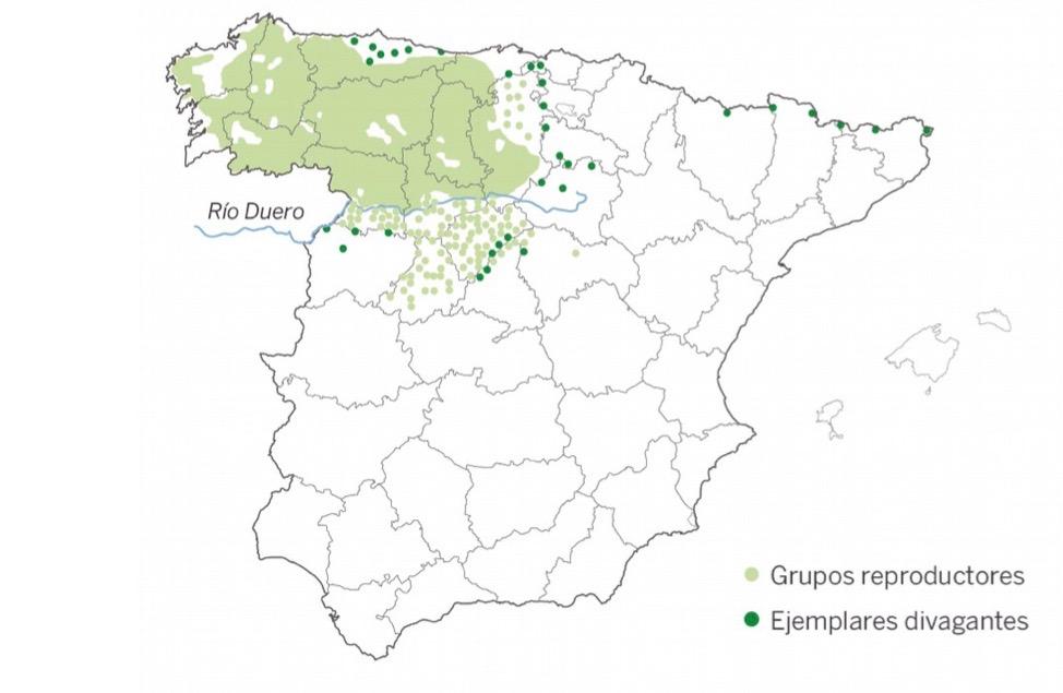 Presencia del lobo ibérico en 2018.
