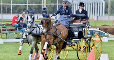 José Manuel Gayán, nuevo presidente de la asociación española del caballo lusitano