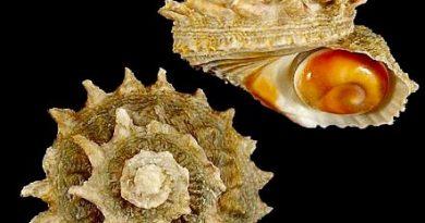 Ni orejita de mar ni ojo de mar: este amuleto es una puerta