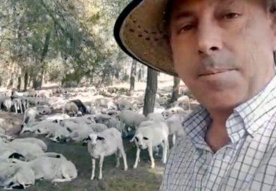 Así se alejan de la extinción las ovejas montesinas de Manuel Torres Guerrero