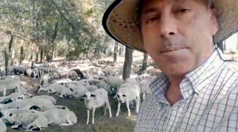 El ganadero Manuel Torres Guerrero junto al rebaño de ovejas montesinas, estos días en el monte de Jaén.