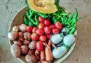 Los alimentos que enfrían el planeta están en la huerta de la esquina