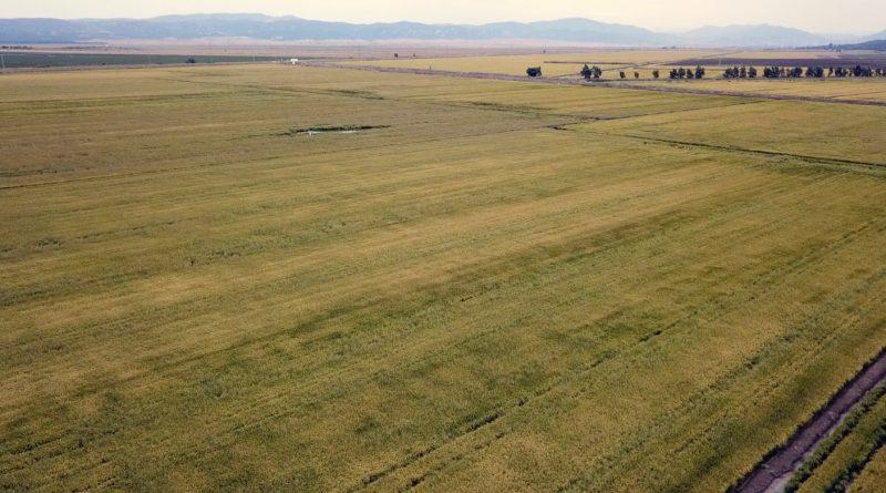 Imagen actual del humedal de La Janda, transformado en campos privados de cultivo en regadío.
