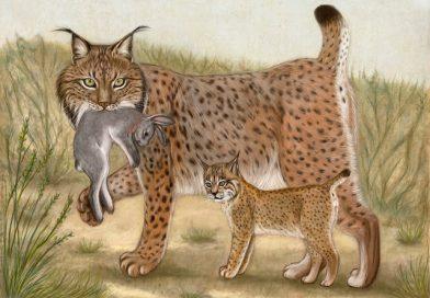 Pérdida de biodiversidad: especies que viven un baby boom